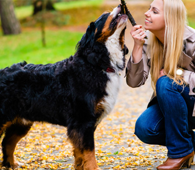 degenerative myelopathy treatment bernese mountain dog